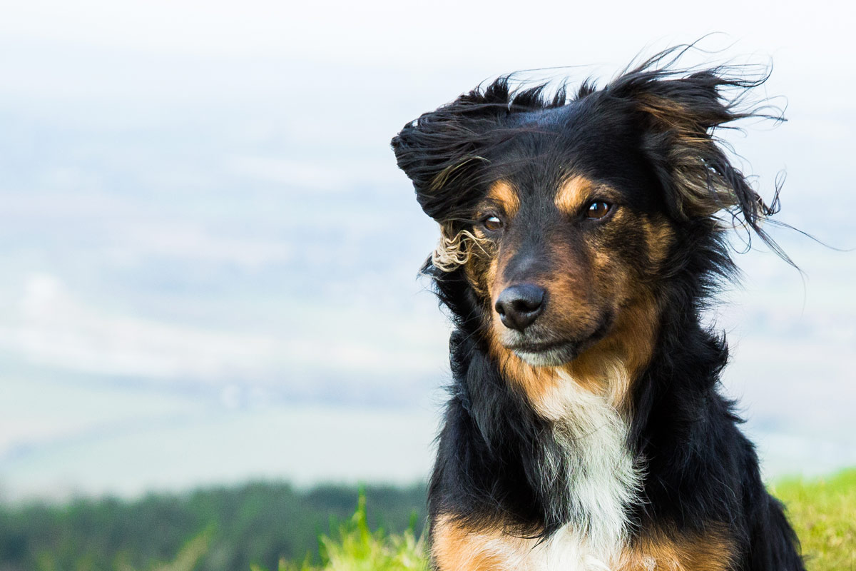 Pet portrait sessions on Bredon Hill