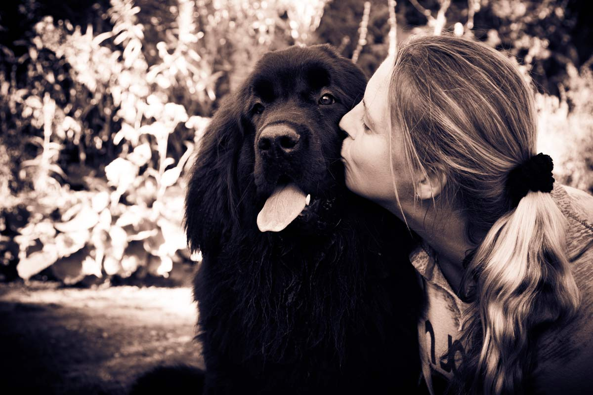 Newfoundland puppy being kissed on the cheek by a woman.