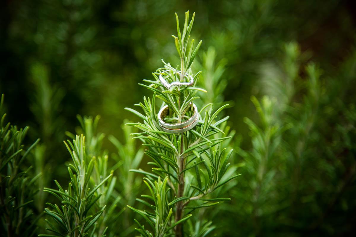 Wedding rings in a garden in Aylesbury.