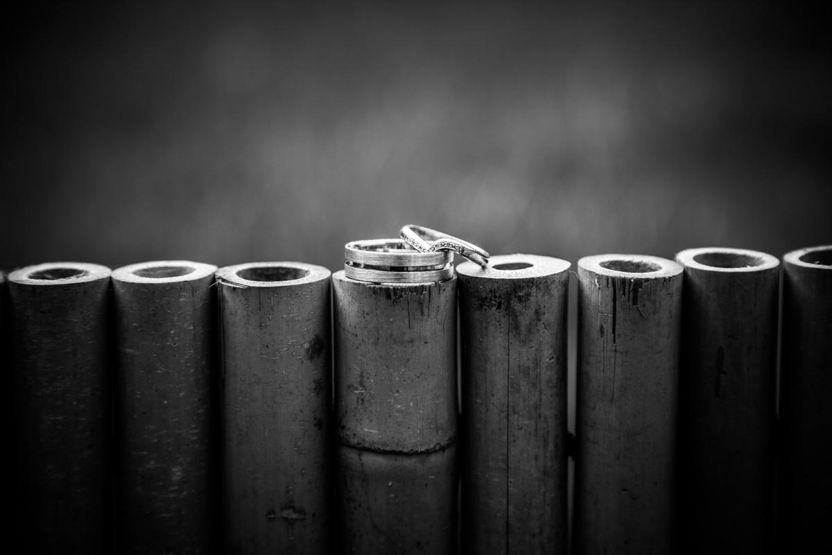 Wedding rings balancing on bamboo.
