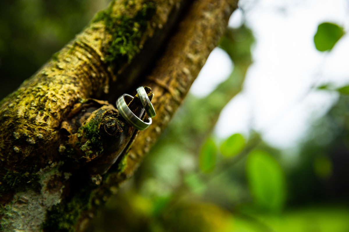 Wedding rings in tree at Culcreuch Castle
